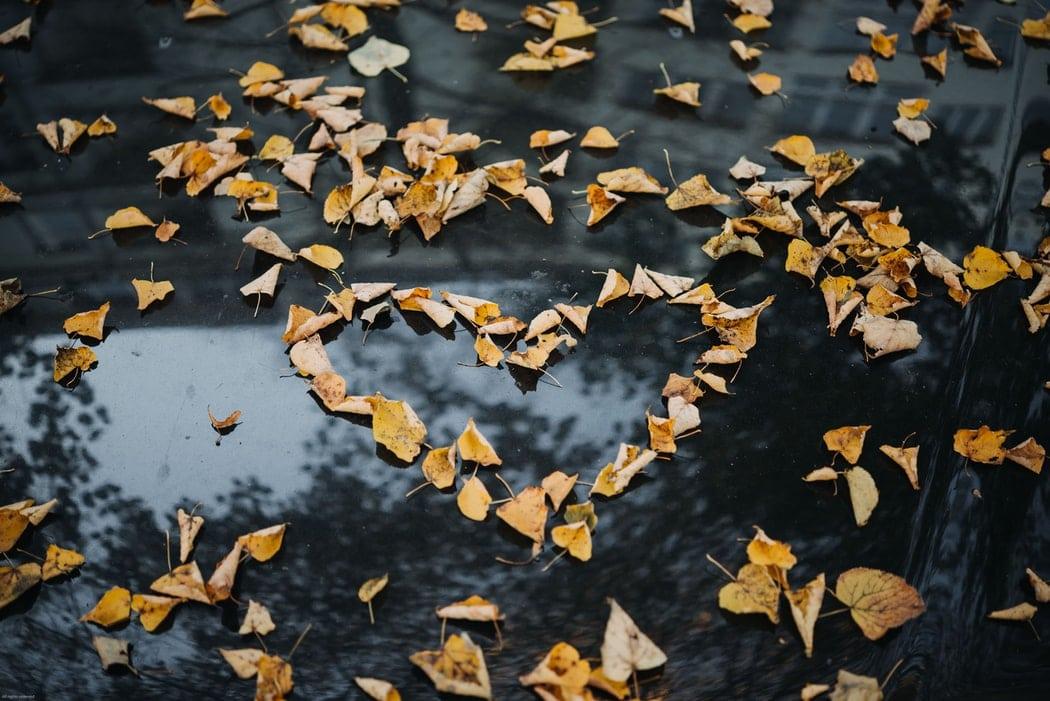 leaves in heart shape on car bonnet